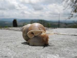 Gros escargot